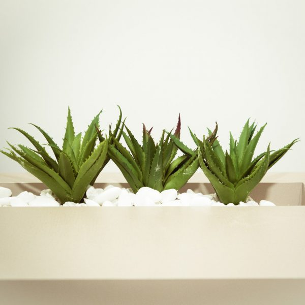 Ultimate Guide Aloe Vera Health Benefits, Side Effects, Uses and Recipes